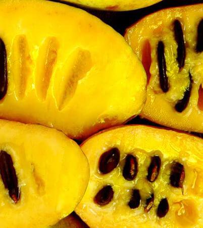 Pawpaw: North America's Tastiest Fruit