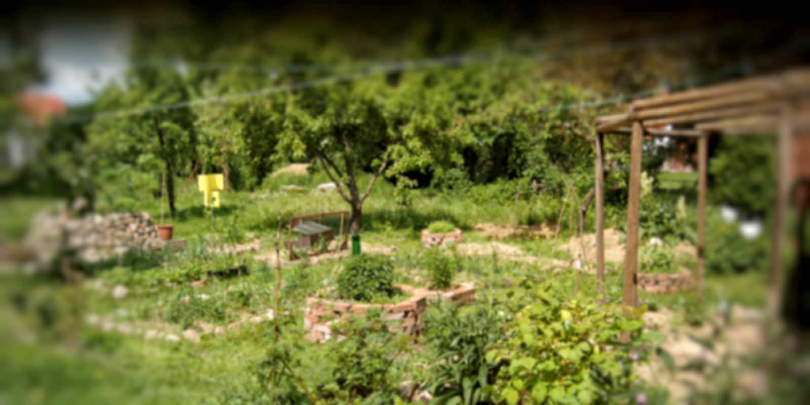 Food Forests: Gardening for 1000 Years – Resources Recipes and Riches