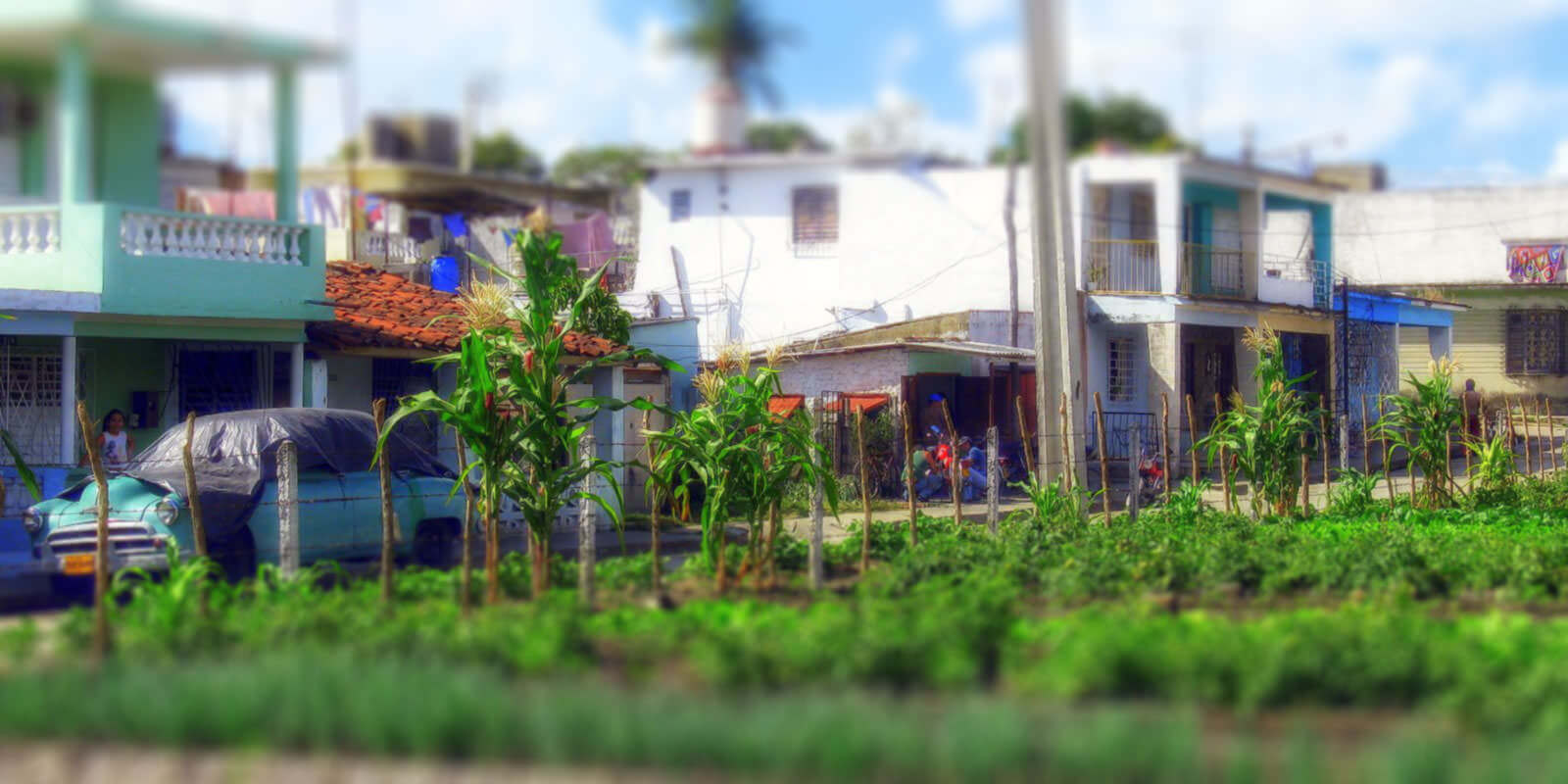 Permaculture Design Cuba
